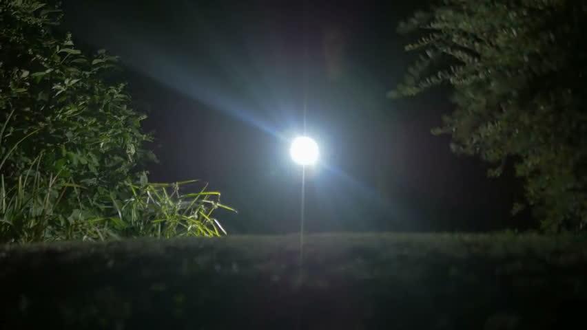 Att välja rätt ficklampa i träsket